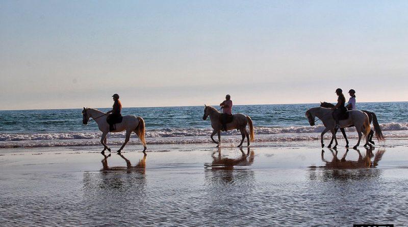 Caballos en la playa de La Barrosa